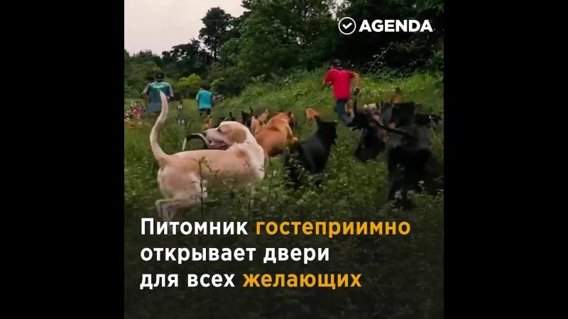 Дом для собак