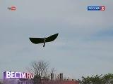 Механическая птица вводит в заблуждение хищных пташек