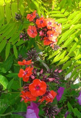 Цветы у Ликки Lecm96LbM20