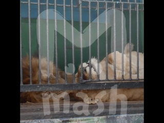 В Рязань приехал зоопарк с дико измученными животными