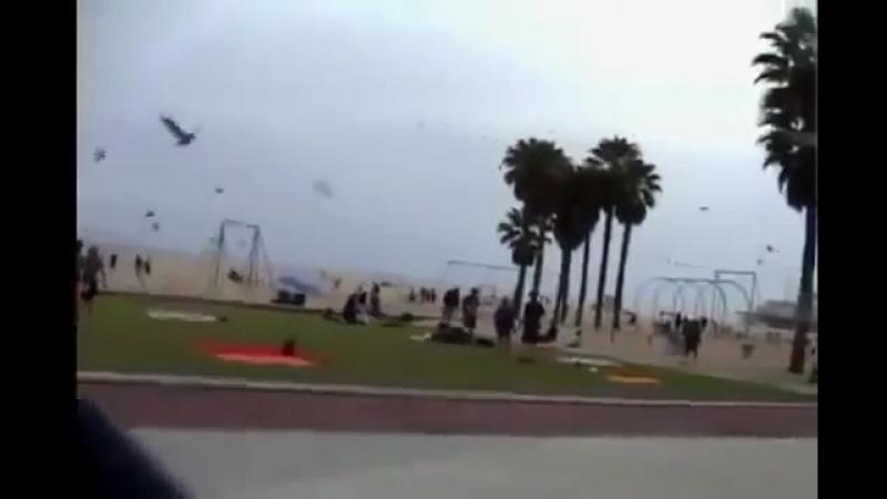 Проказники накормили пляжных чаек слабительным.