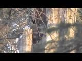 Основной инстинкт Охота на медведя шатуна