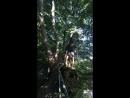 Миша на дереве смелых 1