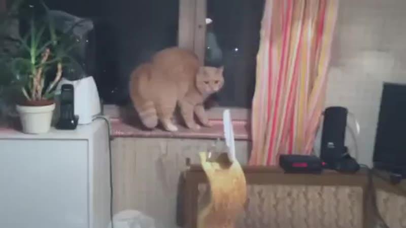 Реакция домашнего кота на новую новогоднюю шапку хозяйки в Сибири