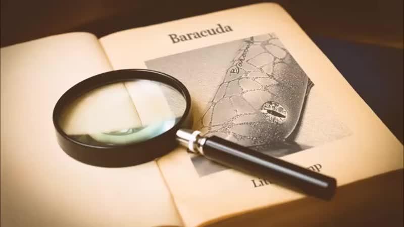 Baracuda Little Tramp.mp4