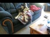 Собака огрызается и не хочет выполнять команду