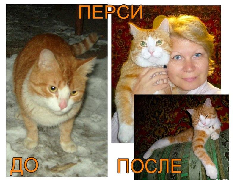До и после. Перси