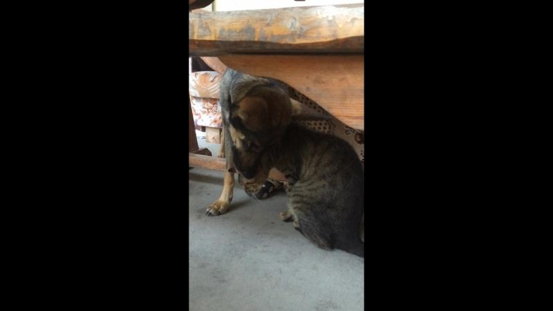 Тузик зализывает раны коту