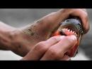 National Geographic: Самые опасные животные мира - Амазония