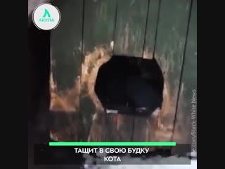 Как пес кошку похитил | АКУЛА