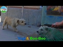Yogi and Boo-Boo took refuge in a schoolyard and evaded rescue for weeks until