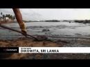 NC Экологическое бедствие на Шри-Ланке