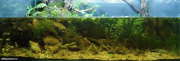 Конкурс дизайна биотопных аквариумов JBL 2014 E4ziV1XG2t8