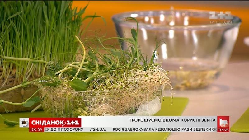 Пророщені зерна як виростити корисну смакоту у себе на підвіконні