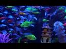 GloFish® Fluorescent Fish Video! (Includes our new GloFish Tetras!)