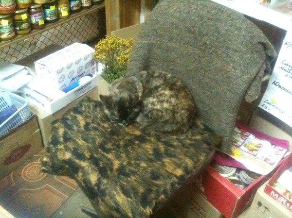 Кошка - хамелеон 79lvl