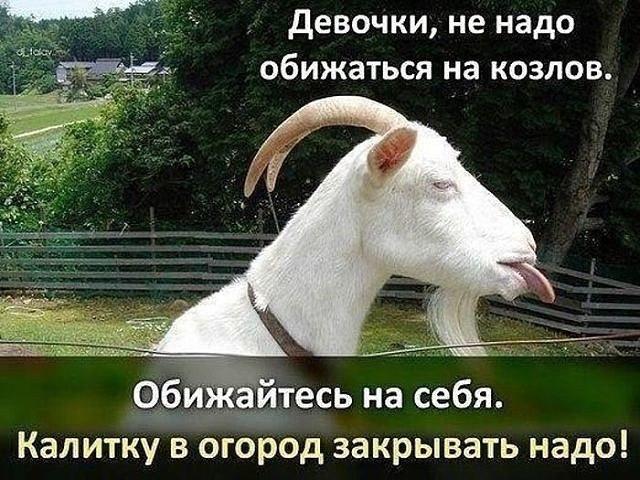 https://pp.userapi.com/c543103/v543103280/26d98/U6Q_0lAYMWM.jpg