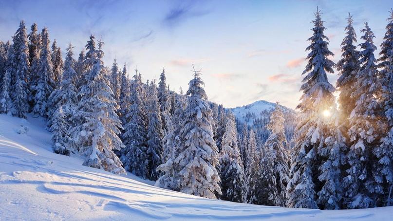 Зимний отдых в Карпатах.