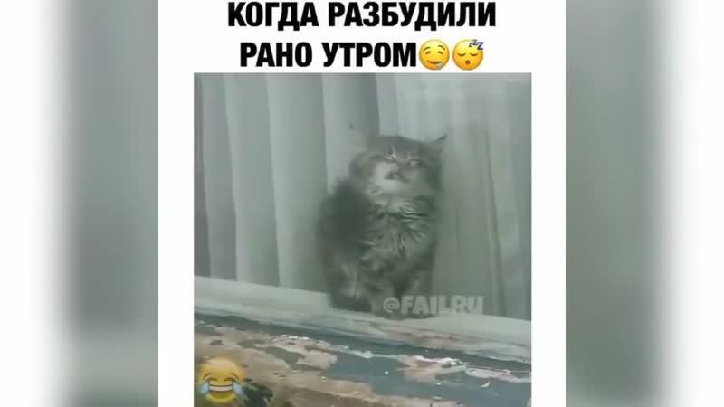 Приколы с котами,котятами и другими животными 17 Jokes with cats, kittens and other animals