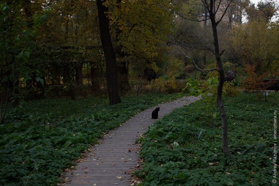 Аптекарский огород в Москве