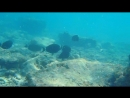 Подводная братва. Индийский океан, Маафуши, Мальдивы