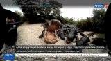 Новости на Россия 24 Трагедия в парке