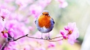 Peaceful Relaxing Instrumental Music, Meditation Inspirational Music Spring Morning by Tim Janis