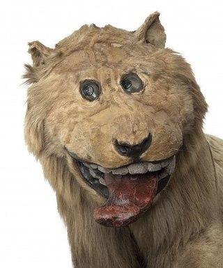 Фото чучела льва для шведского короля Фредерика I. В 1731 году из Африки отправили убитого льва, чтобы в Швеции из него сделали чучело. Плоть животного не выдержала долгой поездки, и до