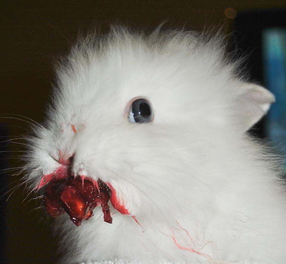 Кролик кушает вишню! Правда мило?, видео и фото приколы с девушками