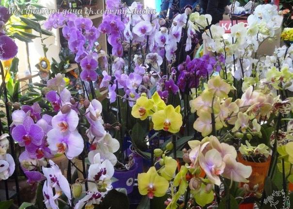 Cекреты рассадки орхидей: как 1 растение превратить в 100!