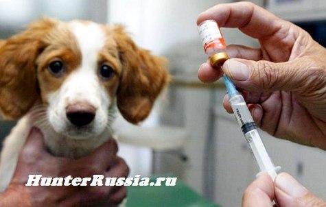 Схема вакцинации.  Первая прививка щенку .  Как делать прививку...  Тематическая публикация. #4: Вакцинация собак.