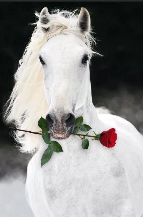 С днем рождения фото с лошадками, шаблон