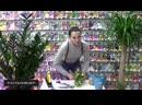 Букет цветов _ Как сделать оригинальную композицию из 5-ти тюльпанов _ Композици
