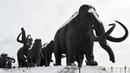 30 000 лет назад по дорогам Ханты-Мансийского района расхаживали мамонты
