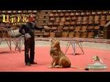 Львенок Сэм в киевском Цирке - Дрессировка животного
