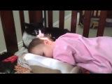 кошка лижет малышку