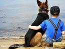 Не обращайтесь с собаками подобно людям. Обращайтесь с собаками подобно собакам.