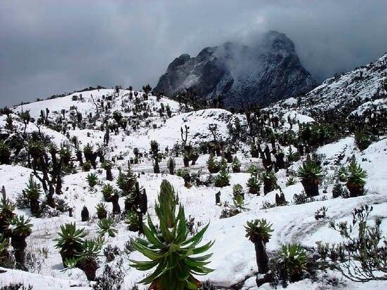 Горы Рувензори в Уганде, Африка