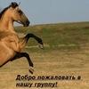 Типичные конники