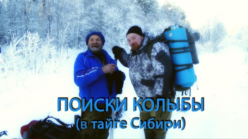Поиски колыбы в тайге Сибирской