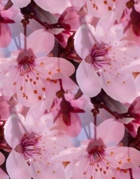 Цветочные и растительные фоны - Страница 2 LX4Sd2jLi0E