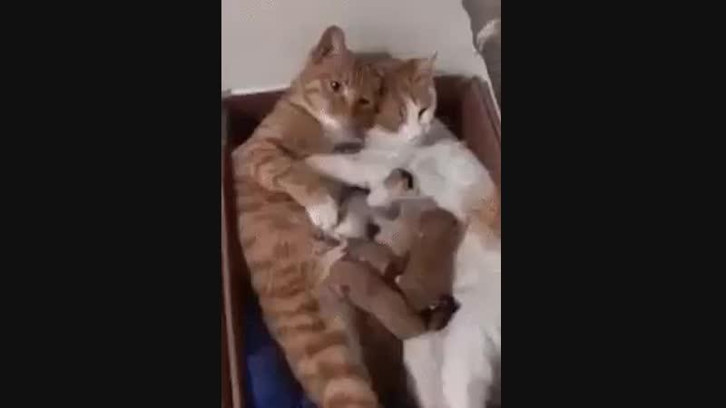 Дружная семейка!