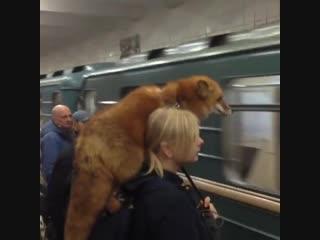 Просто девушка едет в московском метро с лисой на плече