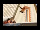 Flying Pavlovsky rooster, Altai Fire - Bird, Полёт Павловского петуха, Алтайская Жар - Птица