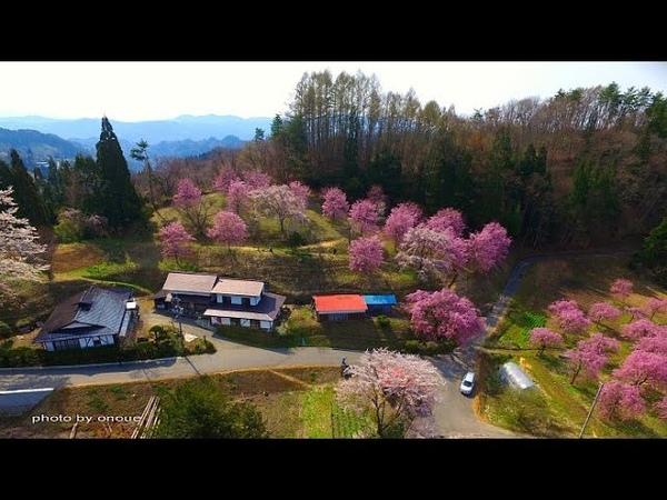 桜と残雪の北アルプスが美しい小川村2016・4K撮影