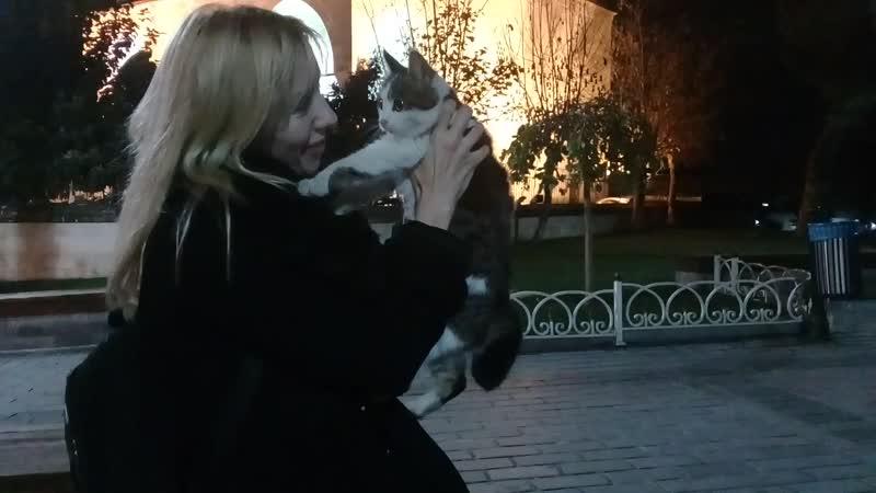 Котики Стамбула...мимо не пройти
