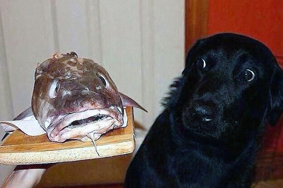 Картинки собака и рыба