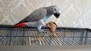 Попугаи и шишки