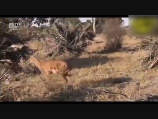 Когда животные спасают друг друга