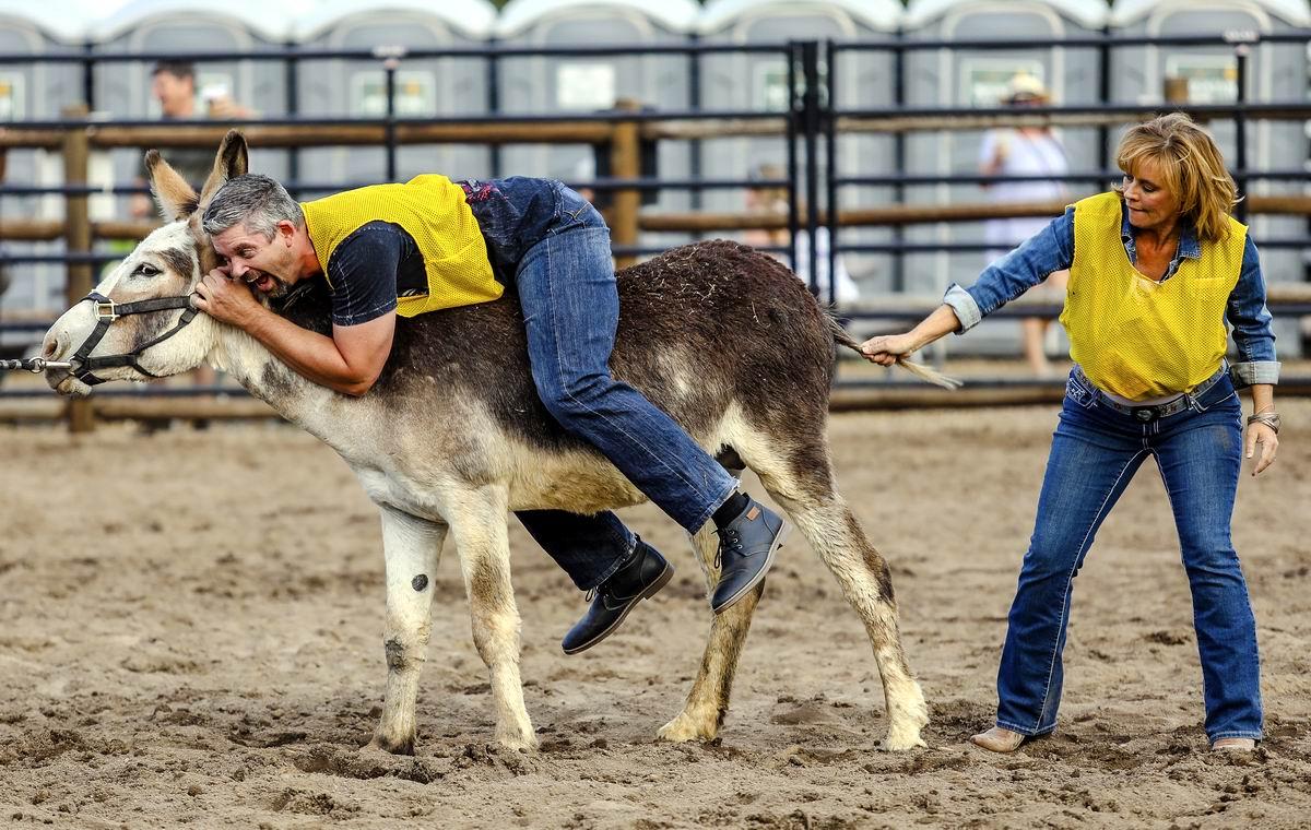 Ну давай же ты, давай: Невозмутимый ослик на родео в американском штате Колорадо